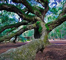 Angel Oak II by Wendy Mogul