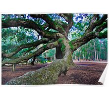 Angel Oak II Poster
