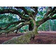 Angel Oak II Photographic Print