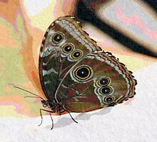Butterfly Oil Pastel by Don Wright