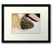 Butterfly Oil Pastel Framed Print