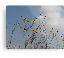 Plains Coreopsis Metal Print