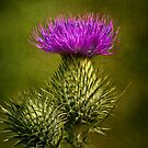 Thistle by Holly Cawfield