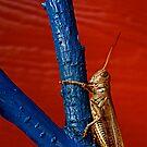 Grasshopper by Pamela Hubbard