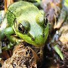 Green frog.... by sendao