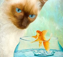 Cat & Fish by AnaCBStudio
