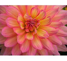 Peach Petals Photographic Print