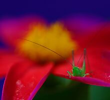 Little Hopper by Debbie Steer