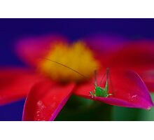 Little Hopper Photographic Print