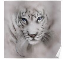 Tigers white tigers tiger white tiger wildlife,wildlife art,nature, gifts, Poster