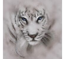 Tigers white tigers tiger white tiger wildlife,wildlife art,nature, gifts, Photographic Print