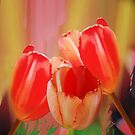 Three colourful tulips on an abstract background by walstraasart