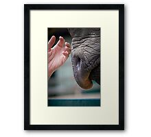 Tentative Touch Framed Print