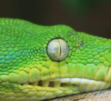 Tree Python Sticker