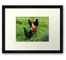 Three Bright Young Pullets Framed Print