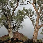 Gum Trees Dead and Alive by Catherine Clemow