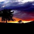 """ Last evening light "" by helmutk"