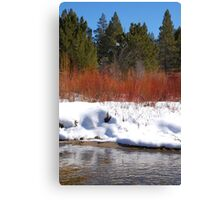 Brilliant Willow Canvas Print