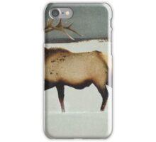 american elk in silver mist iPhone Case/Skin