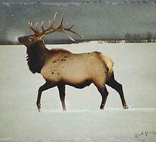 american elk in silver mist by R Christopher  Vest