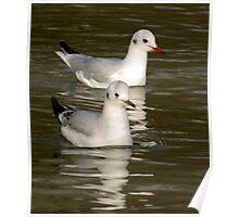 Seagulls #3 Poster