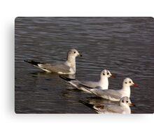 Seagulls #4 Canvas Print