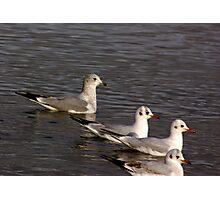 Seagulls #4 Photographic Print