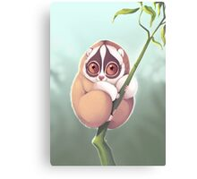 Slo Loris Canvas Print