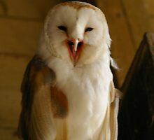 Barn Owl by RCrabb