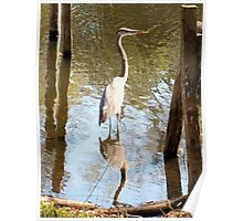 Heron in reflection Poster