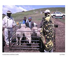Livestock Owner with Rams, Lesotho by Lillian Trettin