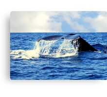 A Whales Tail...  Canvas Print