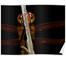 Backed in Black - Libellula croceipennis (Neon Skimmer dragonfly) Poster
