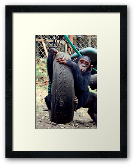 Chimp Swing by ApeArt