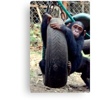 Chimp Swing Canvas Print