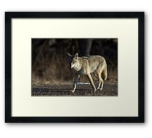 The Coyote Project, Act IV, Scene ii Framed Print