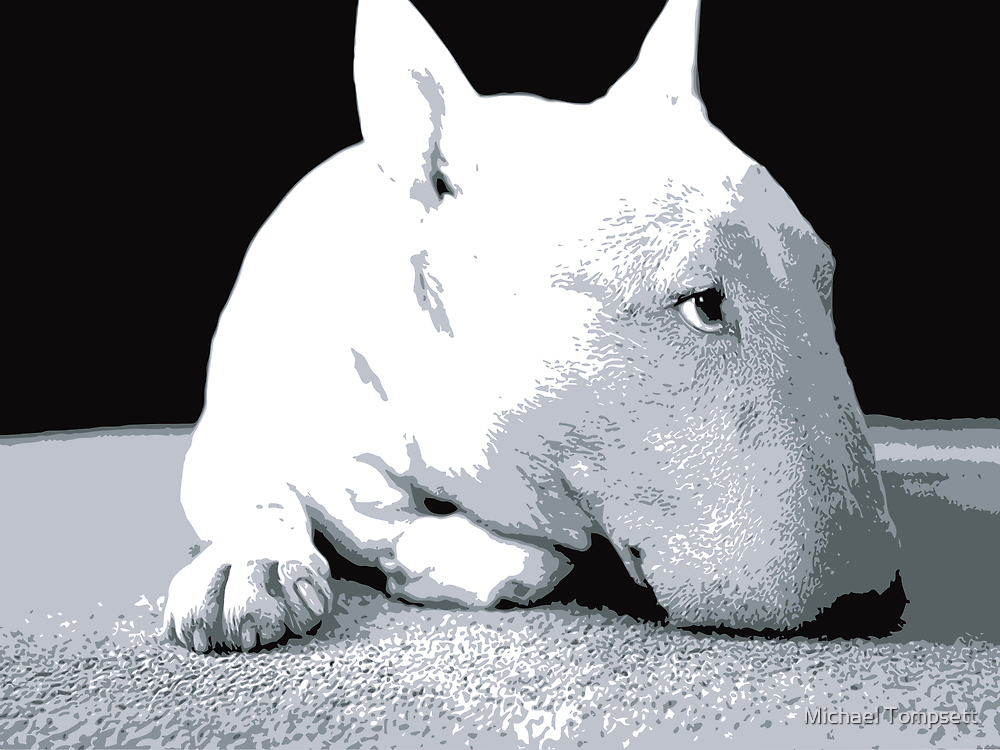 English Bull Terrier Dog, Black and White Pop Art Print by Michael Tompsett