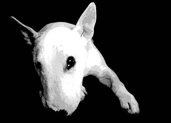 English Bull Terrier Dog, Black and White Pop Art Print by ArtPrints