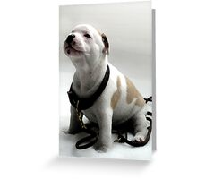 Staffordshire Bull Terrier Puppy, Watercolor Style Art Print Greeting Card