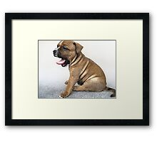 Staffordshire Bull Terrier Puppy Dog, Modern Art Print Framed Print