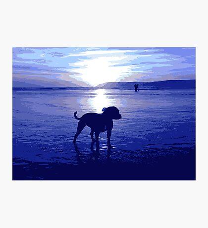Staffordshire Bull Terrier on Beach in Blue, Pop Art Print Photographic Print