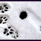 Ice Age - Paw Prints by HELUA