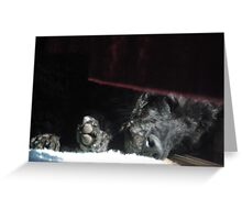 Sun bathed napper Greeting Card