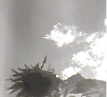 Sunflower Sky by Jessie Scott