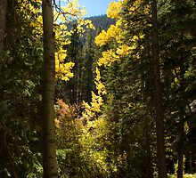 Autumn in the Rockies by Inge Kraus