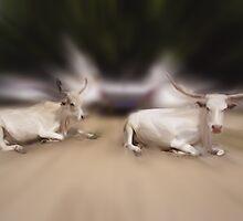 Senegal Steer by Wayne King