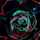 Rose in Glow by Donna Adamski