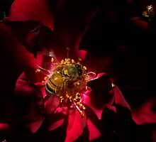 rosy bee by Loreto Bautista Jr.