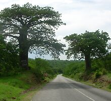 Baobab Lined Road by diasporic