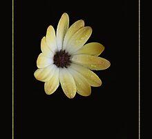 Yellow Flower by LisaRoberts